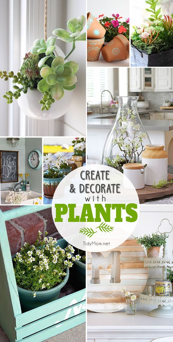 Create and Decorate with Plants