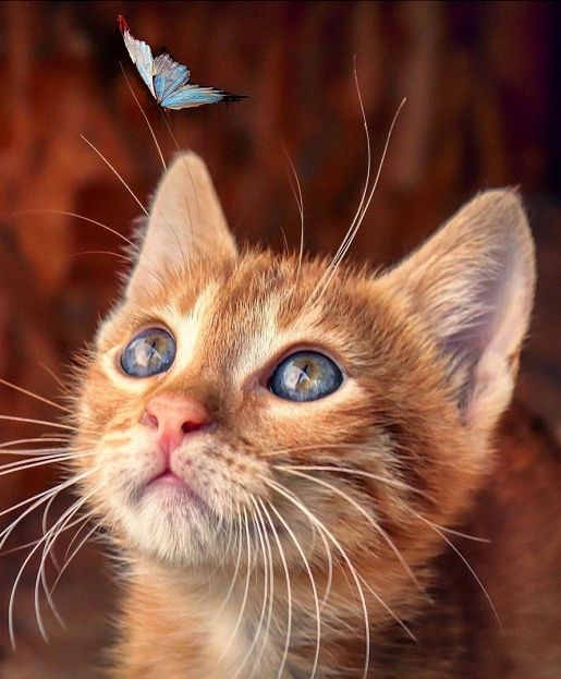 Adorable Cat Necessities Gloria Love Pets Kitten Wallpaper Love Pet Cute Cats