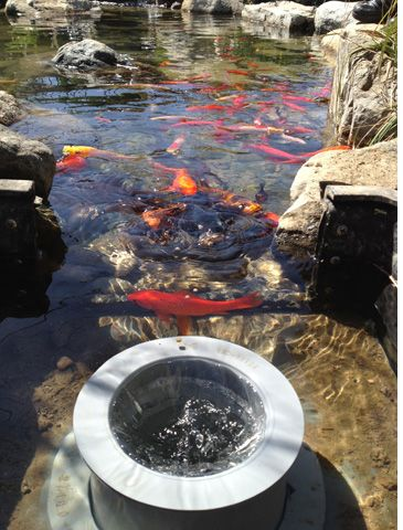 Helix pond skimmer koi pond man made and water garden for Koi pond maker