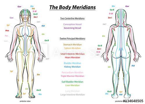 28++ Chinese medicine meridians diagram inspirations
