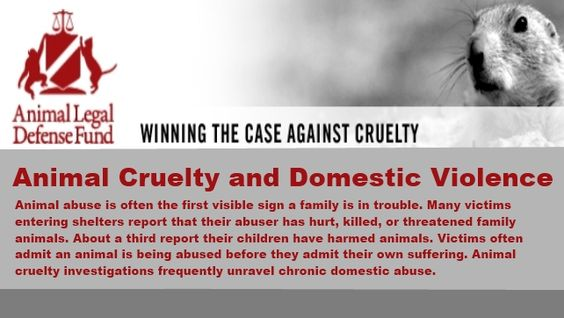 Do Animal Abusers Deserve Tougher Sentences? - AvvoStories