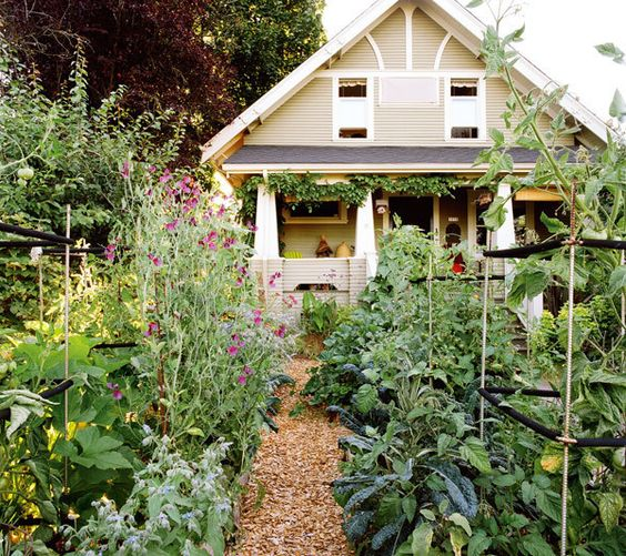 Gardens front yards and beautiful on pinterest for No maintenance house plants