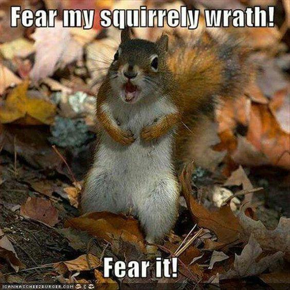 Badass squirrel!
