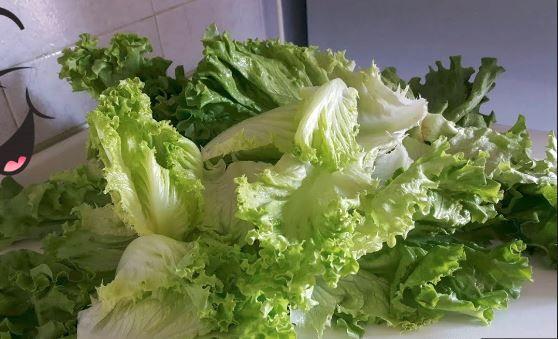 الاحتفاظ بالخس كيفية حفظ الخس كيف احتفظ بالخس طريقة حفظ الخضار الورقية Vegetables Lettuce Food