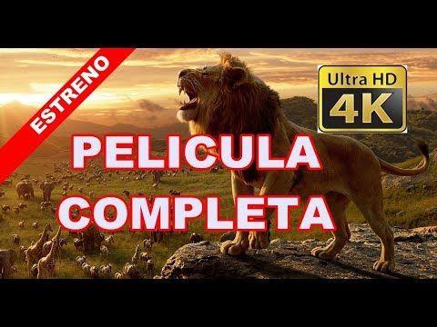 El Rey Leon 2019 La Mejor Pelicula Estreno De Disney En Espanol Latino In 2020 Rey Disney