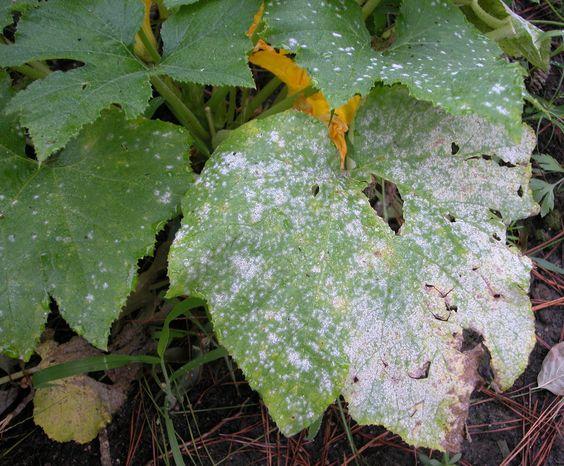 Dans plusieurs régions, l'été a été particulièrement sec, juste la condition que…