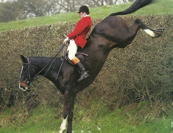 Great balance coming off of a hedge!  ... or is that a stone wall??  At any rate, I hope he kept his seat!