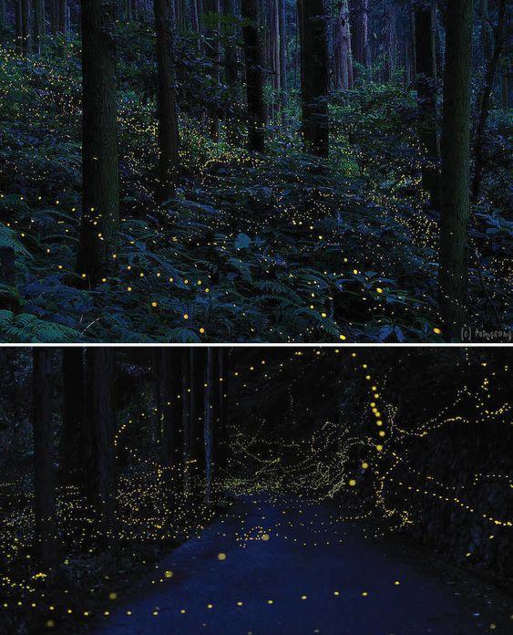 increíbles El bosque luciérnaga en la Región Chugoku, en Japón