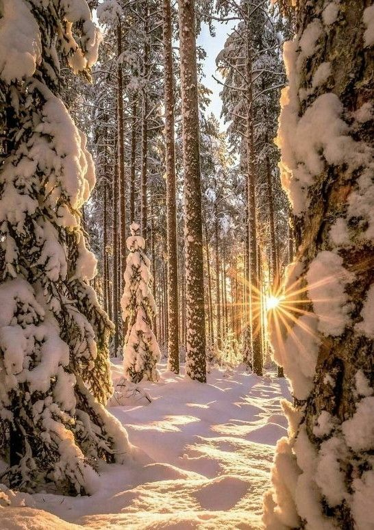 Forest Tree Nature Winter Snow Photography Winter Scenery Winter Landscape Winter Scenes