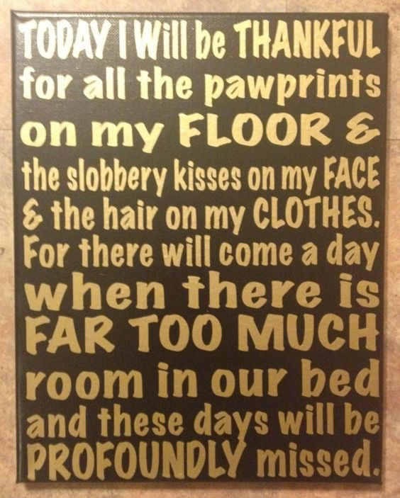 Thankful For Quotes: Today I Will Be Thankful For All The Pawprints On My Floor