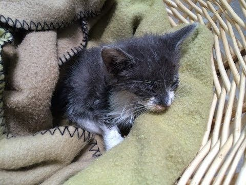 Baby Kitten Rescue Youtube Kitten Rescue Baby Kittens Kittens
