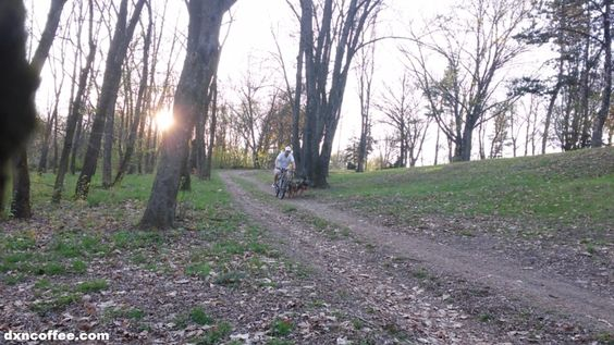 Taking 3 dogs for a walk with a mountain bike: Gergely Takács, DXN
