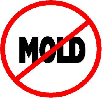 How #Mold is Affecting the Public