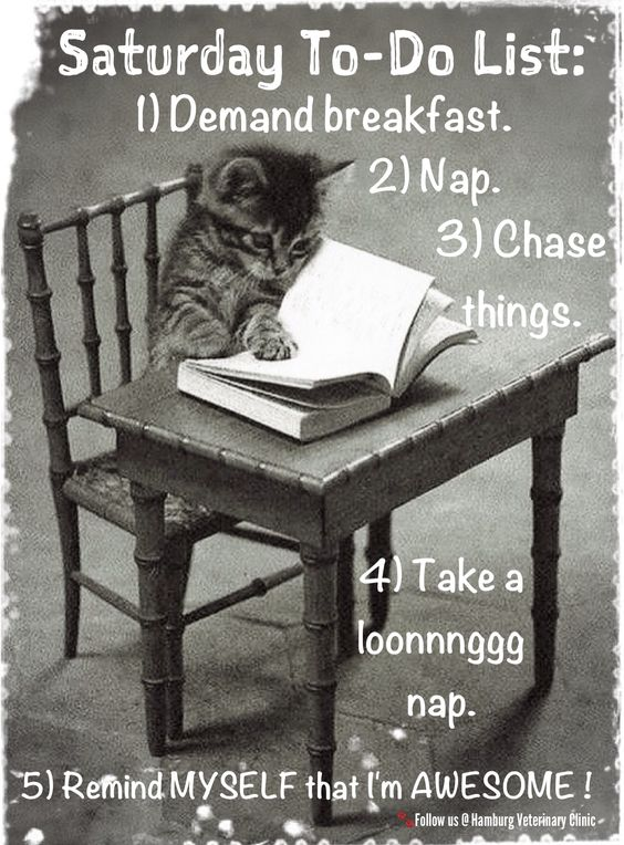 Saturday humor | Relax | Things to do list | Animal funny | Cute cat: I know what I'm doing this Saturday!  What are your plans?: