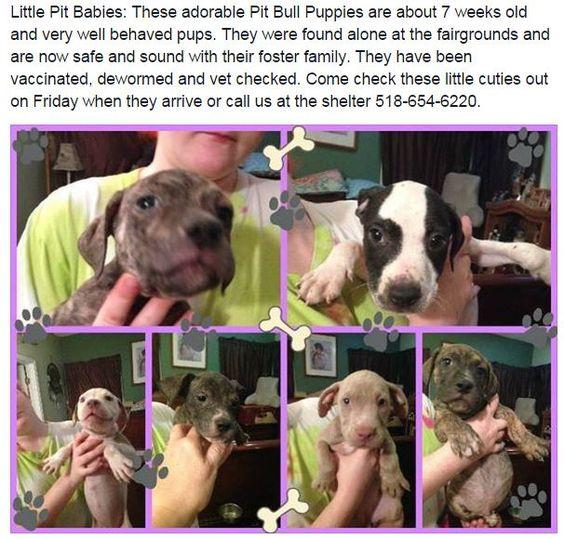 #rescuemutt #fureverhome #rescue #whywerescue #adoptdontshop  #dog #resuepups #dogsofinstagram #pupsofinstagram #rescueonly #dogs #doglover #mixbreed #ilovedogs  #puppy #pup #rescuedog #puppylove #dogsofadirondacksaveastray #shelterdogsrock  #mansbestfriend  #dogstagram #pet #ilovemydog #adoptme #followme #savealife #petfinders #adoptapet #adoption