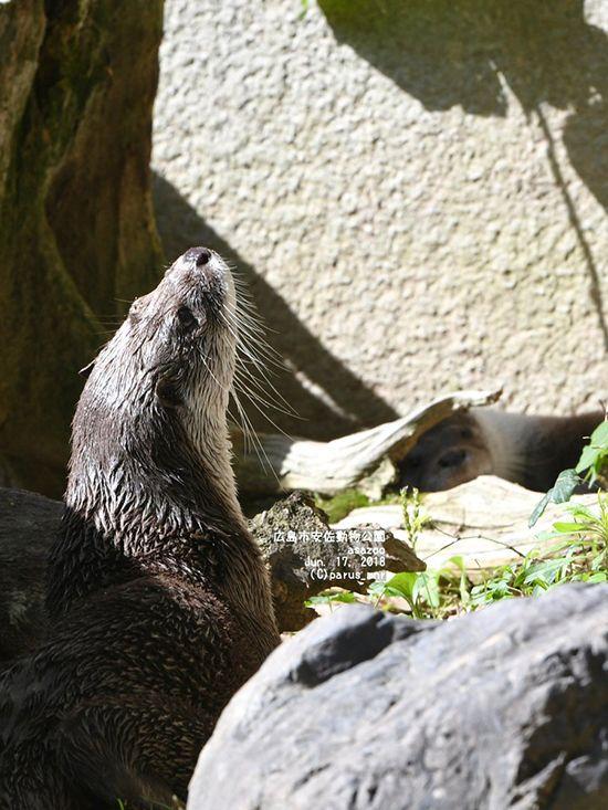 Every Move You Make Every Step You Take Otter S Watching You Otters Every Step You Take Otter Love