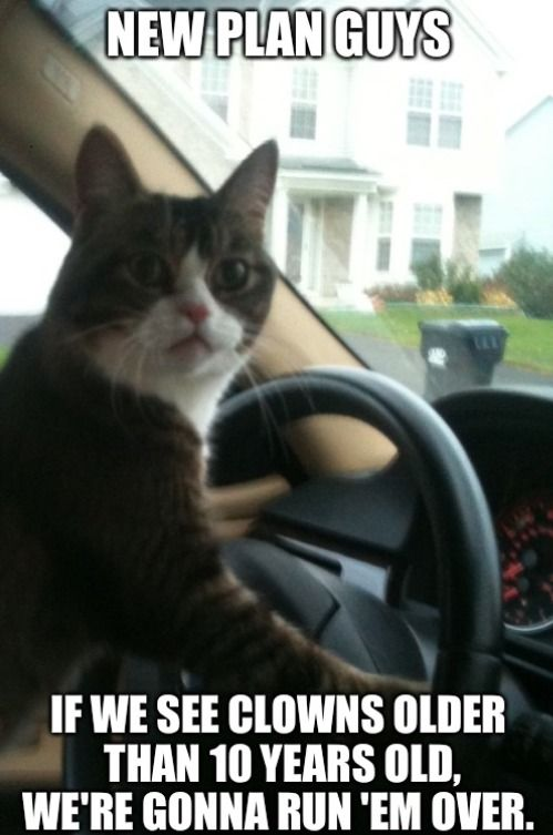 51 Of The Funniest Cat Pics Of All Time Catoftheday Funnycat Funny Cat Pictures Funny Kids Funny Animals