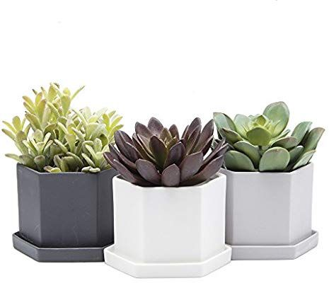 Chive Hexi 4 Quot Hexagonal Succulent And Clay Pot Planter With Drainage Whole And Saucer Bulk 3 Pack Tray And Dish Black With Images Succulents Planters Clay Pots