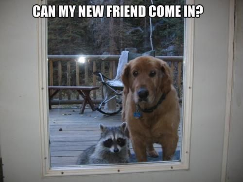 Can my new friend come in?