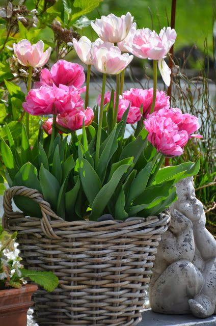 Mon Jardin Mes Merveilles: Tulipes 2015 : Duo pour un panier