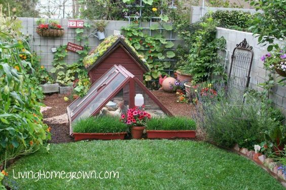 Gorgeous #chicken #coop in the #garden