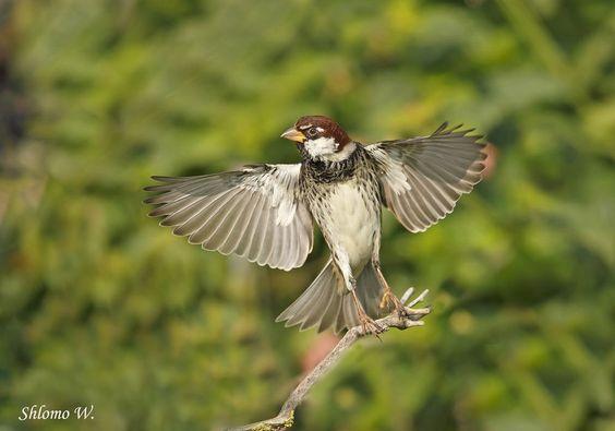 Very rare position of a bird...