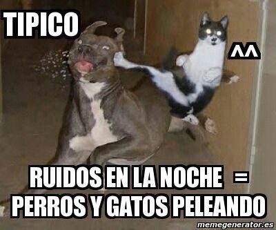 Memes Graciosos Tipico Perros Y Gatos Peleando Perros Y Gatos Graciosos Memes De Animales Divertidos Gatos Graciosos