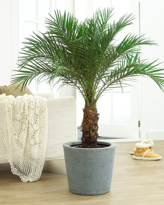 12 common houseplants safe for cats