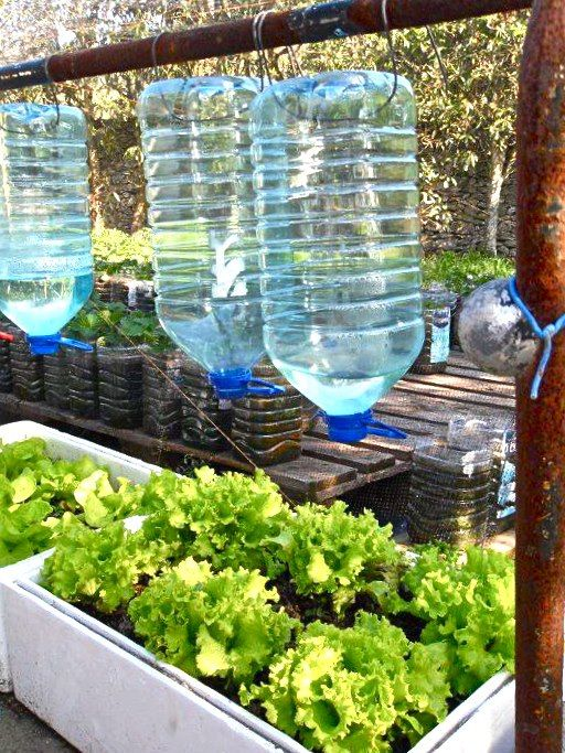 Bottle drip irrigation and irrigation on pinterest for Home garden drip irrigation design