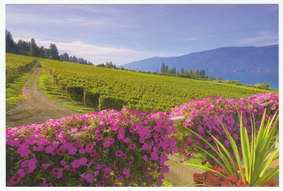 Postcards - Canada # 414 - Gray Monk Estate Winery, Okanagan Lake, British Columbia