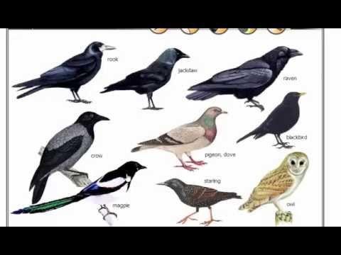 نتيجة بحث الصور عن نوع من انواع الطيور بالانجليزي Animals Bird Science