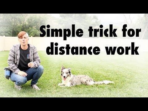 Simple Trick For Distance Work Dog Training Youtube Kikopup