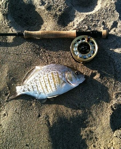 Shops the surf and surf on pinterest for Surf fly fishing