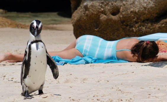 1.%20Swim%20and%20play%20with%20penguins%20in%20South%20Africa