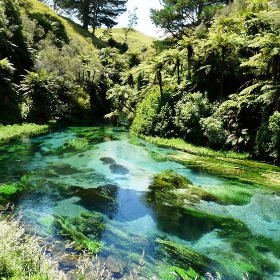 12 Great Auckland Walks to Do - Far from the city or amongst the hustle and bustle, try one of these great Auckland walks