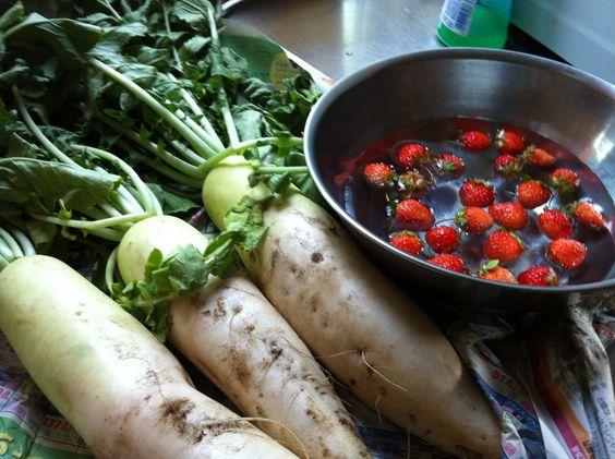 ちょっと形は良くないのですが 自家菜園から、大根、イチゴ  盛夏の頃