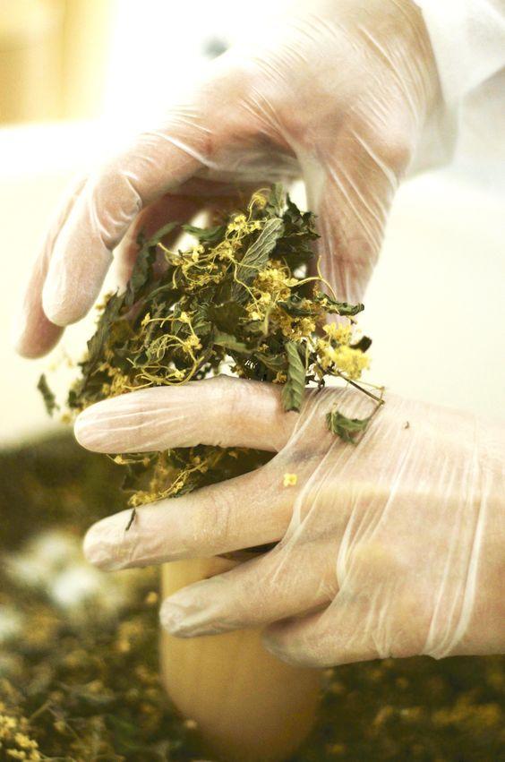 Nos tisanes sont traitées avec amour par notre herboriste et toutes les opérations sont réalisées à la main. #beautygarden #herboriste #tisane #teaporn Photo Dan Courtice