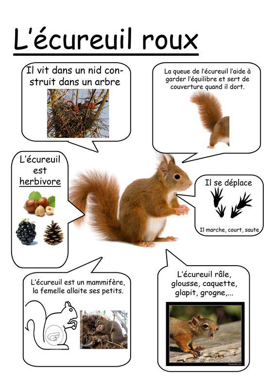 Fiche écureuil: