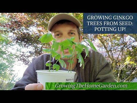 Pin On Growing The Home Garden Videos