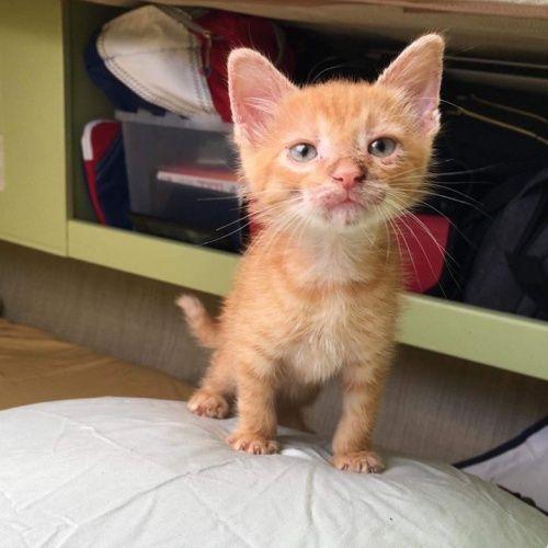 Rescue Kitten Is Now Beloved Sailor Cat Kitten Rescue Kittens Animal Rescue Site