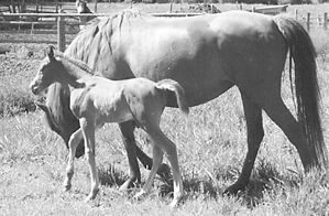 Feeding The Pregnant Mare 37