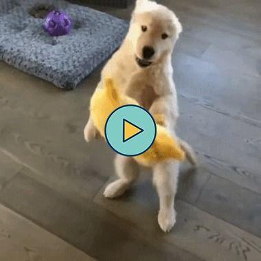 o cachorrinho vai pegar o ursinho e deixa cair