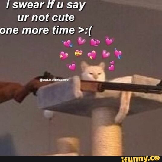 I Swear If U Say Ur Not Cute One More Time Ifunny Ifunny Funny Memes Swear