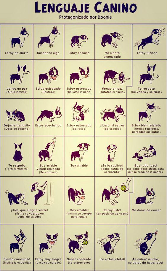 M Cómo entender el lenguaje corporal de tu perro: cuidados y nombres para tu mascota. Perro feliz