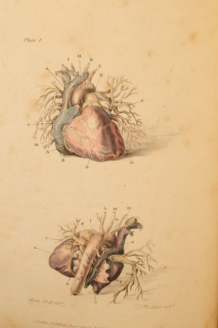 Charles Bell's 'Engravings of the Arteries, Illustrating the Second Volume of the Anatomy of the Human Body…and serving as An Introduction to the Surgery of the Arteries', 1801, pp 50, ten fine full page hand coloured engravings, publishers advertisements at end.    viarattlesnakebooks