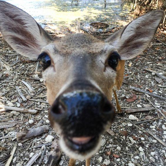 Deer #blogdebetty
