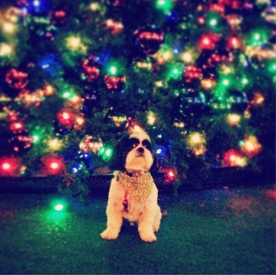 Pet Night with Santa!