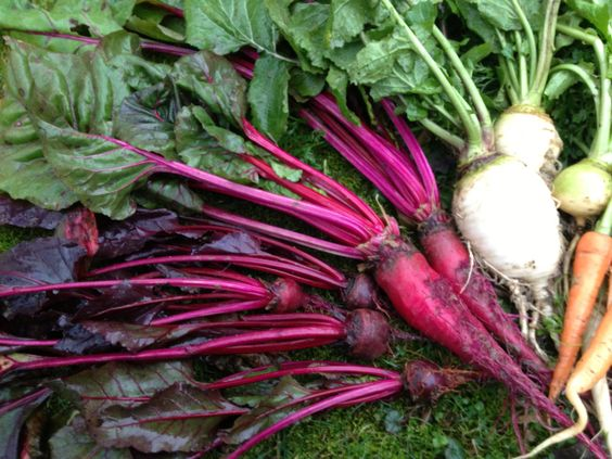 The Secret to Growing Beets: Five Tips for Success