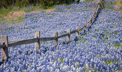 Best Spring Festivals - Texas Hill Country in April