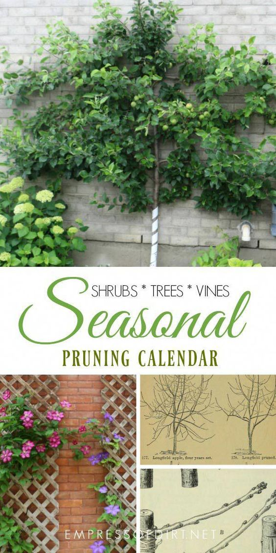 Pruning is probably one of the most confusing topics for new gardeners because there is no single method or timing that suits all situations. But, there are some basic underlying principles that, once you know them, can make it much easier to know whether to snip and clip or leave things alone. This post walks you through a pruning and deadheading calendar which you can adapt for the plants in your garden. #gardeningbasics